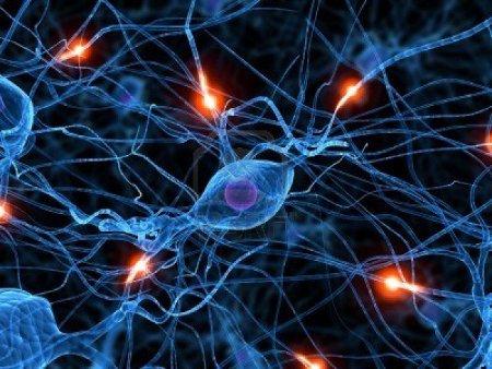 Где находятся стволовые клетки у взрослых