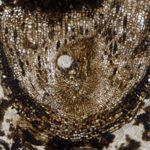 Группа палеонтологов обнаружила древнейшие в мире стволовые клетки