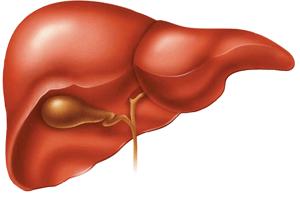 Как используют стволовые клетки в онкологии