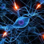 Стволовые клетки и онкология
