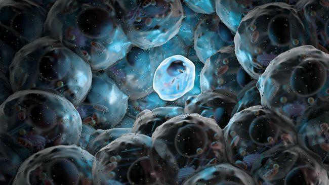 В Китае скоро начнутся клинические испытания стволовых клеток на людях
